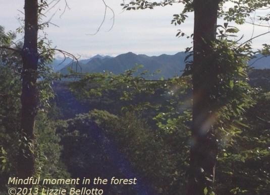 foresttrailnow2